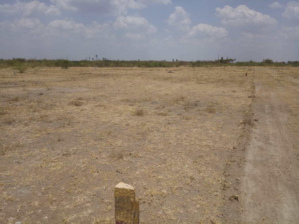 Agriculture Land For Sale in Kariapatti, Tamil Nadu