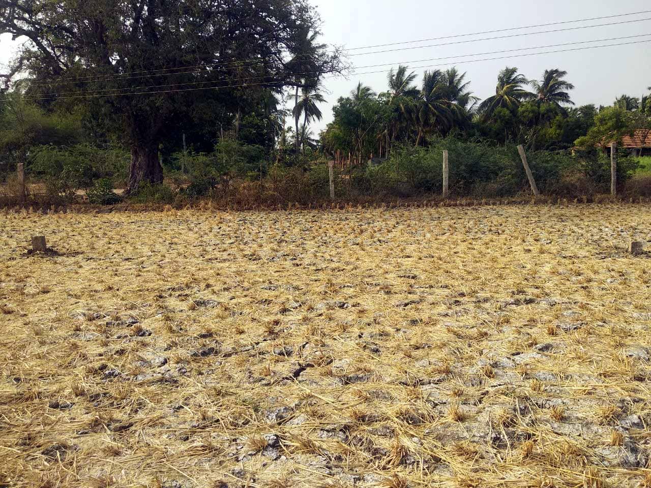 Agriculture Land For Sale in Vathiyur, Tamil Nadu | SFarmsIndia com