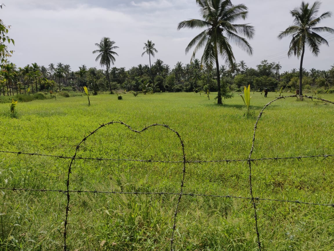 Agriculture Land For Sale in Bagilaghatta, Karnataka